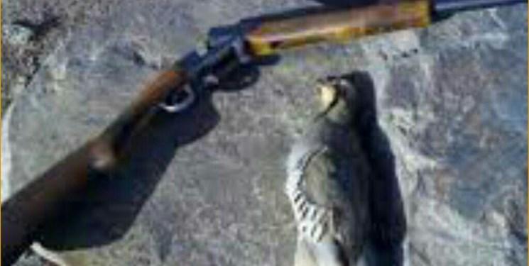 دستگیری ۲ اکیپ شکارچی غیرمجاز در روانسر