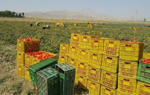 (مجلس برنامه ای برای برخورد با دلالان بخش کشاورزی دارد؟
