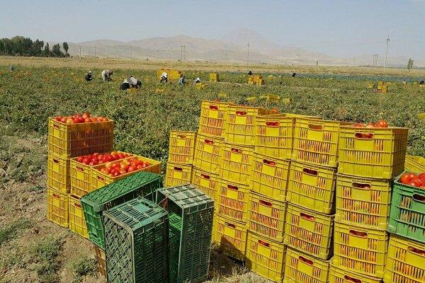 مجلس برنامه ای برای برخورد با دلالان بخش کشاورزی دارد؟